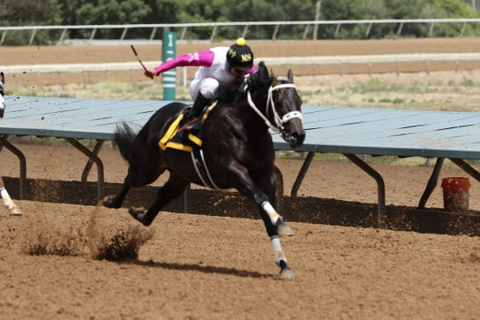 Paramounte, ridden by Mauro Salcedo, races in the fourth race of Saturday's Zia Fest at the Ruidoso Downs. Paramounte came in second place.