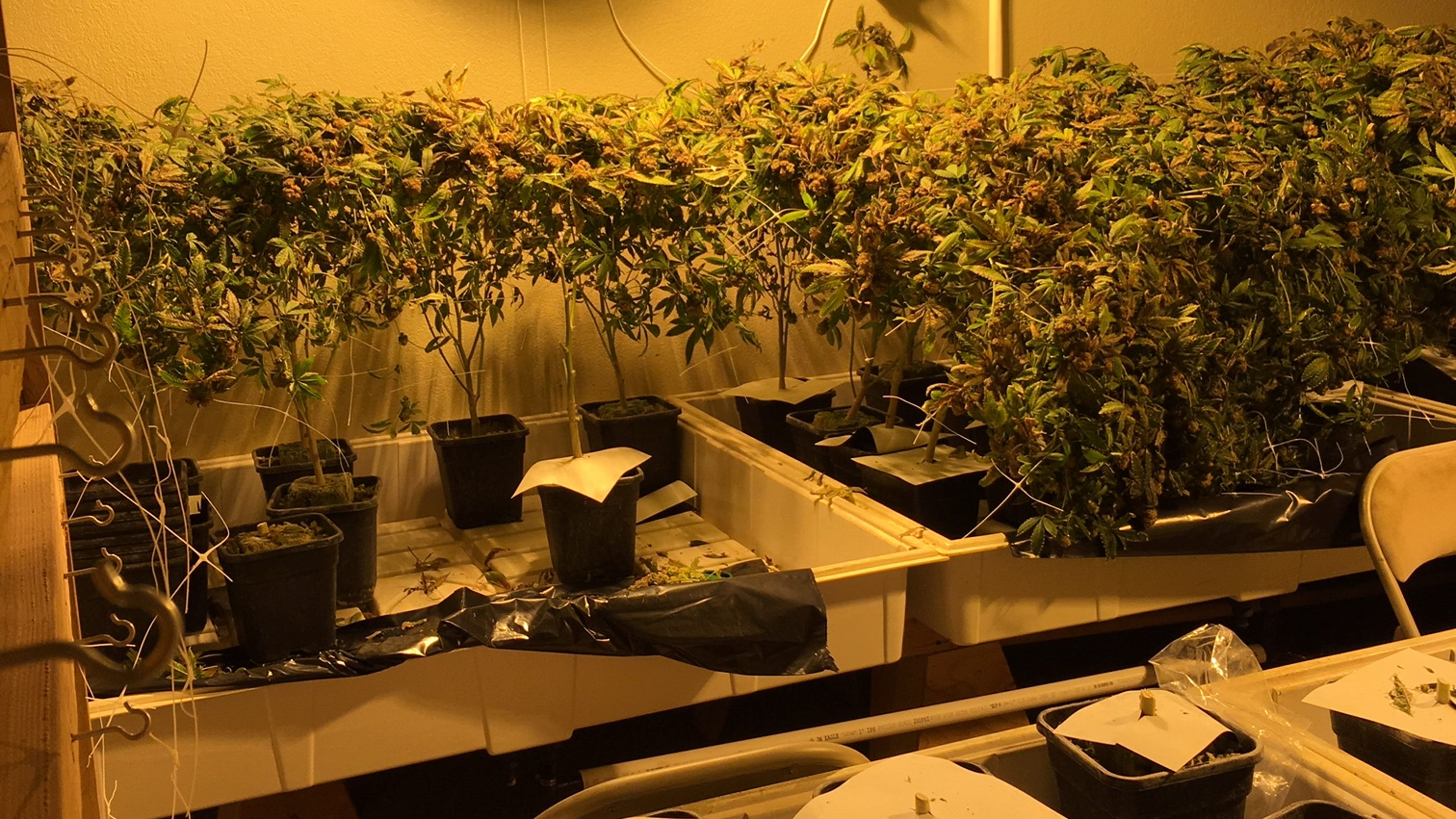 140 pounds of weed found during grow house raid in Visalia