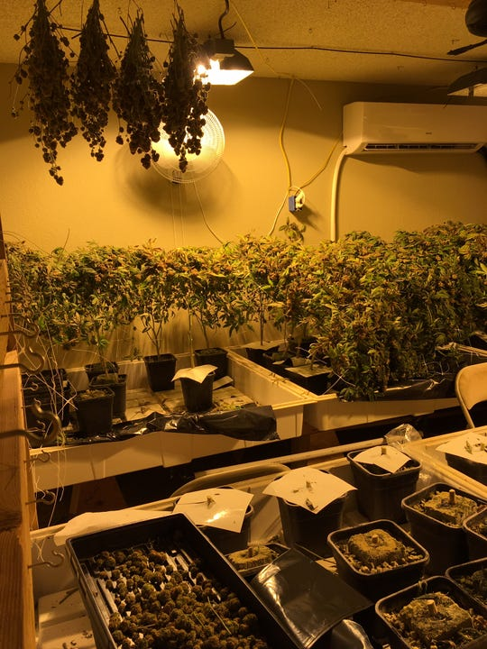 Visalia narcotics detectives found an illegal marijuana grown on Friday, July 26, 2016.