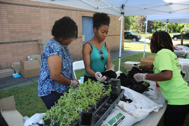 Volunteers plant sedum in containers for a living green wall at the Southwick Community Center, 3621 Southern Ave., in the Park DuValle neighborhood. The wall is expected to act as a filter for air pollution from nearby chemical plants.