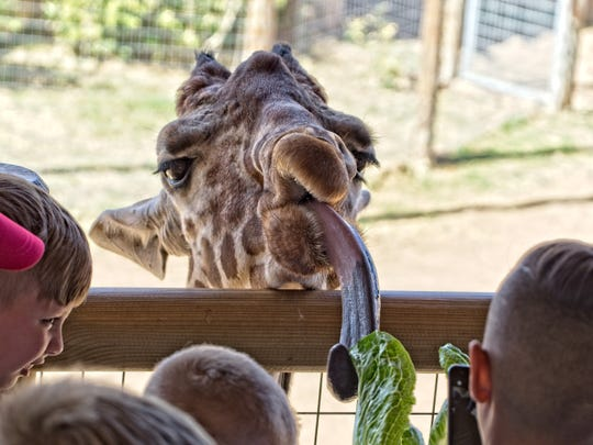 Lettuce tell you about the Abilene Zoo, the city's top tourist attraction.
