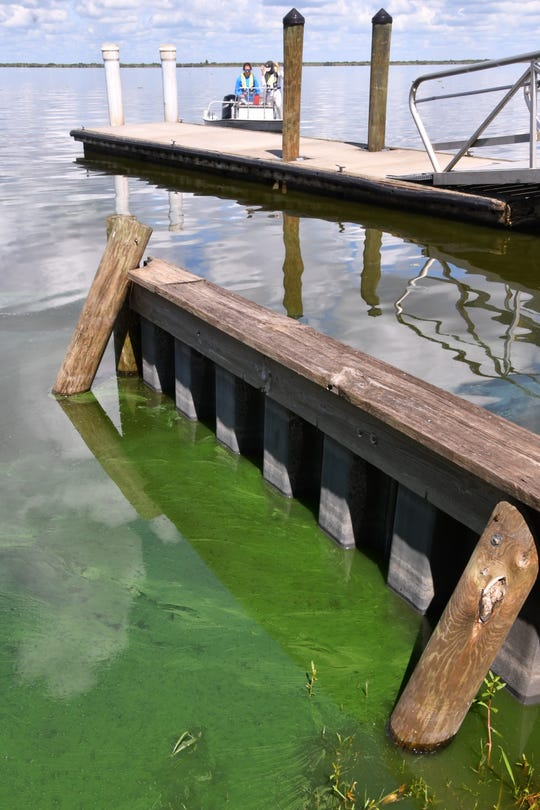 A boat approaches the dock at Lake Washington Monday (7/29/2019), where signs warn of blue-green algae.