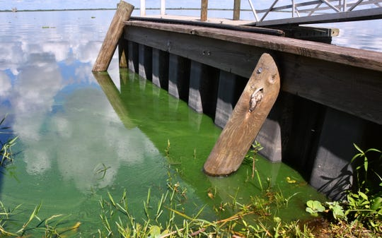 Blue-green algae coated waters near the banks of Lake Washington Monday (7/29/2019), where signs warn of potentially toxic algae.