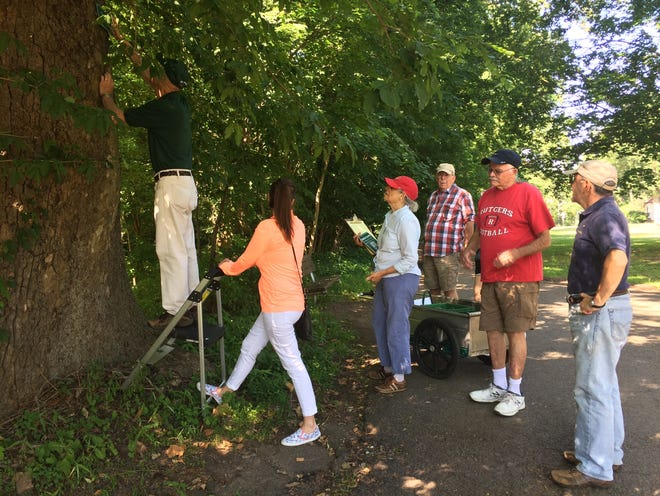 Union County's volunteer Master Tree Stewards help residents learn about the role of trees in the environment, through classroom activities in local schools as well as outdoor projects in County parks. Here, Master Tree Steward Dean Talcott (in red shirt) leads a group of volunteers putting up name tags on distinctive trees along a walking path in Echo Lake Parkin Mountainside.