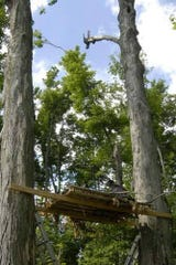 This is the makeshift platform local Mansfield area volunteers made in 2008 when the eaglets and their nest fell 60 feet to the ground at the Clear Fork Reservoir. One of the eagles has been found and photographed at Stony Creek Metropark in Michigan.