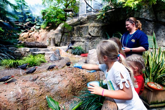 Amanda Ista, wild connection zookeeper, (far right) watches as from left, Wren Peterson, 7, Ellie Watter, 6 and Audrey Koszewa, 7, feed Inca terns  at the Free Flight Exhibit in the Aviary at the Milwaukee County Zoo on Monday, July 22, 2019.