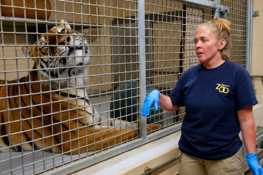 Zookeeper Sheri Guay talks about how they care for animals such as  Kash, an Amur tiger, in the Big Cat holding area at the Milwaukee County Zoo on Monday, July 22, 2019.