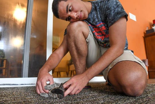 "Joseph Liberato, 17, a rising senior at Vero Beach High School and president of the Animal Rescue Club, plays with a four-week-old kitten he is fostering through the Indian River Animal Advocates, on Sunday, July 28, 2019, at his home in Indian River County. ""I'm fostering a kitten because I love cats, and this is our mission,"" Joseph said. ""It's a really good experience. It's one of the best things I've ever done in my life, and I really like giving them an opportunity to have a home."""