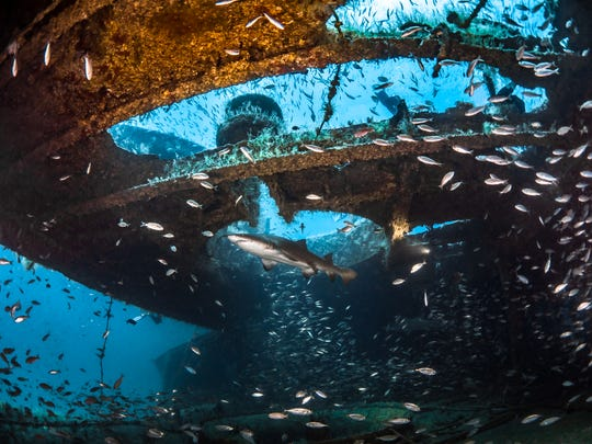 Not only can divers visit deep water shipwrecks of the coast of Morehead City,North Carolina, but they also have a good chance of seeing the sand tiger sharks that are drawn to them.