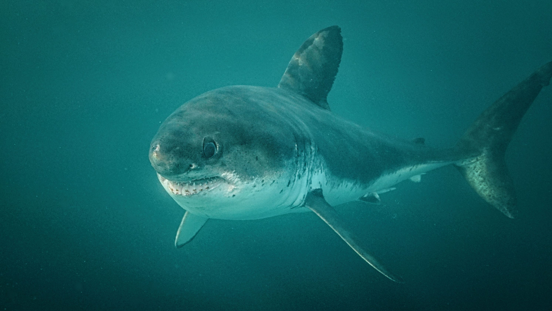Florida New Smyrna Beach shark attack: 3 people bitten in