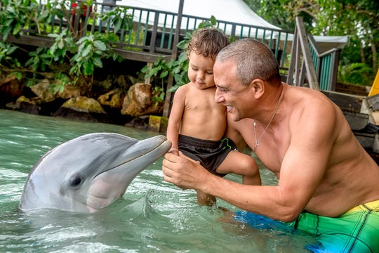 It's recommended to make advance reservations for the dolphin experiences at Dolphin Cove since slots are limited.