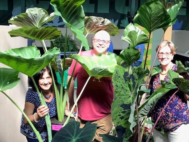 "Peeking through Jim Chakeres' colocasia collection at the Ohio State Fair are the flower show judges, from left, Mary Lee Minor, Jim Chakeres and June Gebhardt. This was a prize-winning ""Plant Nerd Collection."" in the horticulture division."