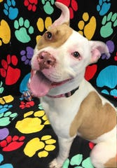 Miss Opal is one of the pups at the Sandusky County Dog Warden's Office who needs a home.
