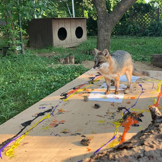 Artwork painted by wolves from Wolf Park in Battle Ground will be for sale during the Art War for Wolves event  Aug. 8 at Black Acre Brewing Co. in Indianapolis.