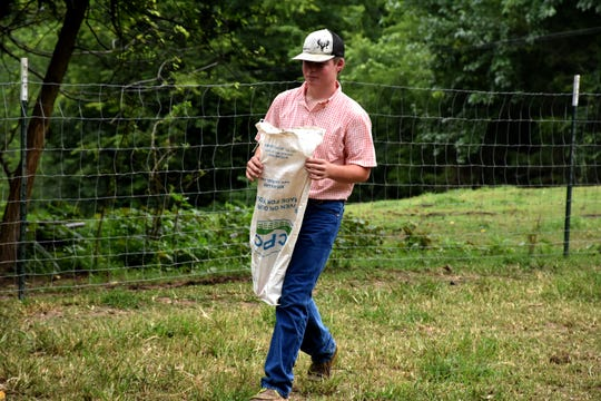 Cole Roberson walks across the barn lot with a feed sack at his Thompson's Station farm on July 28, 2019.