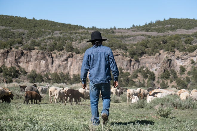 """Shepherd Eliseo Curley keeps watch over his herd in this image from """"The Navajo-Churro Shepherds"""" Stetson Stories blog entry."""