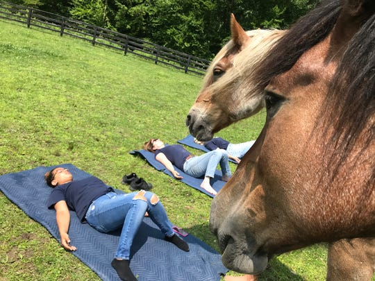 Participants relax in yoga poses as horses look on at Lucky Orphans Horse Rescue in Dover Plains.