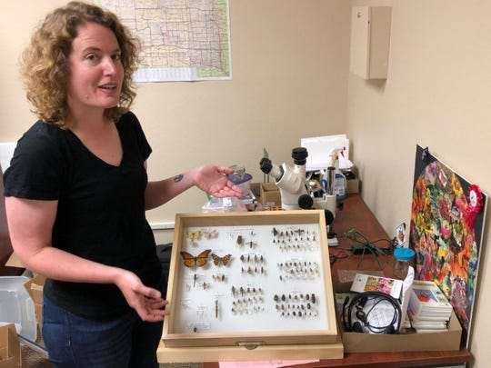 Amanda Bachmann, an urban entomologist for the South Dakota State University Extension service, shows off a collection of pollinators found in the state. Included are more than a dozen types of bees, wasps and several butterflies.