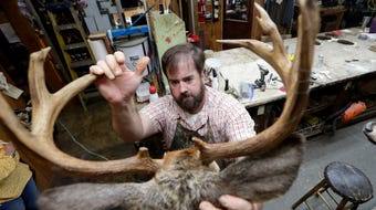 Dallas Burns, a taxidermist at Harden's Taxidermy in Thomasville, Ga., demonstrates the process of mounting a deer for a customer.