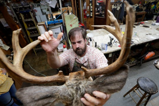 Dallas Burns, manager of Harden's Taxidermy in Thomasville, Ga., adjusts the ears on a deer to see which way the ears should face as he puts some of the finishing touches on the mount.
