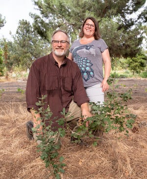 Steve and Mary Lee pose among valley oak saplings and the remaining pine trees left from when Christmas trees were sold at Quaker Oaks Farm.  The farm is now a non-profit and recently organic certified in line with the goals of founders Jim and Beth Lovett in pursuit of sustainable agriculture.