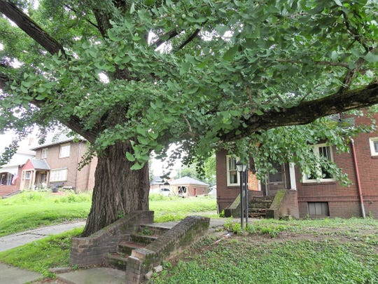 A ginkgo tree at 406 Chestnut St. is believed to have been planted in 1855 when the land was owned by the Spangler family. The office area past the tree once held the practice of Dr. James G. Smailes Sr. He built the house in 1923 and practiced medicine until his death in 1962.
