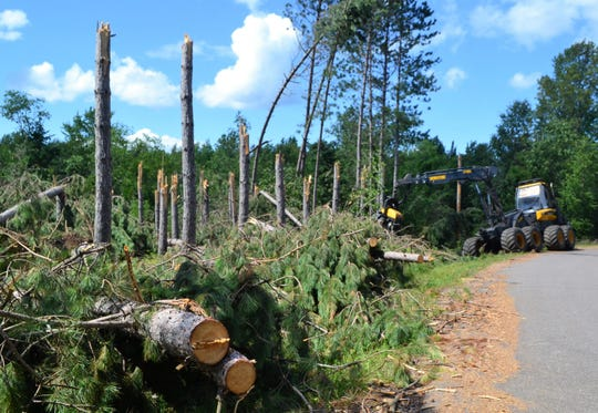 A logger works to clear brush and trees from along a road in the town of Doty in northern Oconto County on July 29.