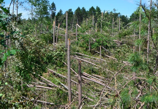 The July 19, 2019, storm snapped off pine trees like toothpicks in this section of land on Star Lake Road in the town of  Doty in northern Oconto County.