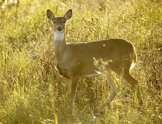 Increased antlerless bag limits and a larger CWD zone are just some of the changes hunters will see in the coming deer season.