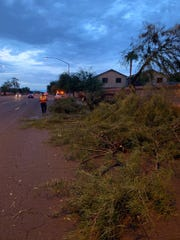 Transportation crews responded to trees down after Tuesday night's monsoon at Mckellips Road and Stapley Drive in Mesa