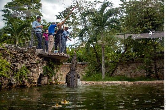 Comprometidos con el cuidado de los animales, Ecoparque Aluxes, en Palenque, Chiapas, ofrece a los visitantes una aventura inigualable.