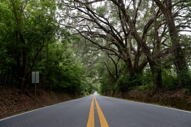 Centerville Road is one of many canopy roads in Tallahassee.