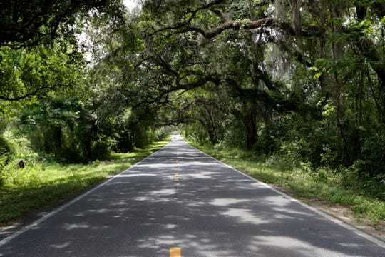 Centerville Road is one of nine canopy roads in Tallahassee.