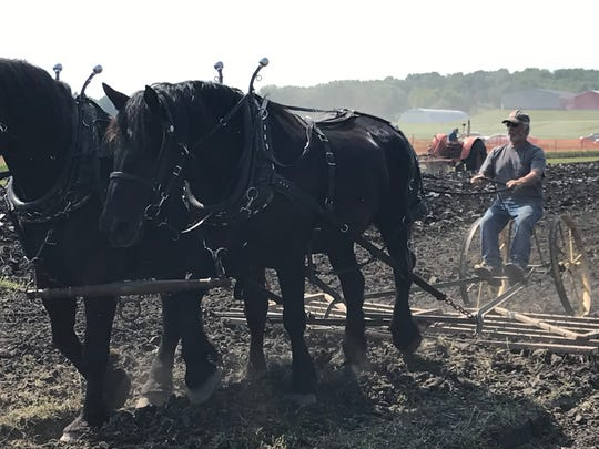 Ron Luebke guides his team of black percheron horses during a fieldwork demonstration at Farm Technology Days in Jefferson County.