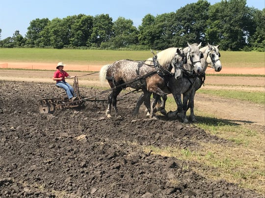 Mary Jane Swedberg of the Jefferson County Draft Horse Association pulls a disk with her team of draft horses, Gilson, 6, Maverick, 8, and Thor, 6.