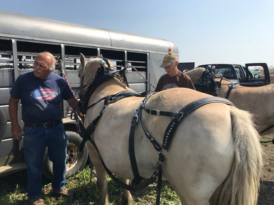 Dave Kemna (left) and his helper, Allan Roost, harness up Kemna's team of Norwegian Fjord horses, one of the world's oldest breeds hailing from Norway.