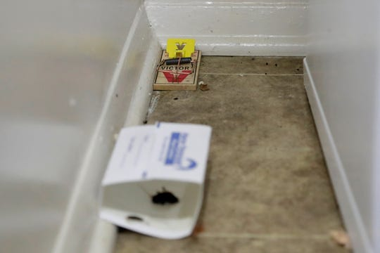 Mice droppings are seen near a mouse trap and a glue trap in the kitchen of Davon Jones' residence at the Commons at White Marsh apartments, Tuesday, July 30, 2019, in Baltimore.