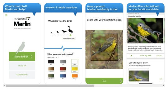 Screenshots of the Merlin app, available on the Android or Apple stores,  which can help you identify birds in the wild.