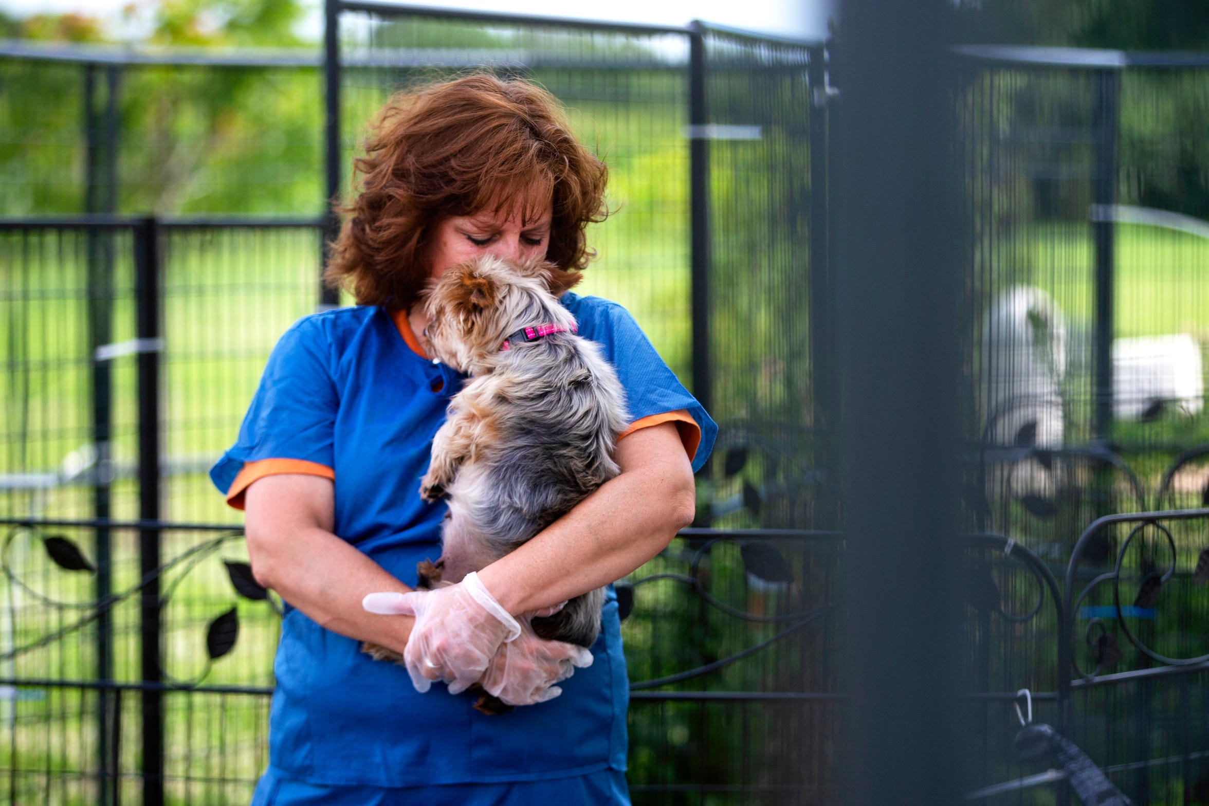 Amy Heinz holds Australian silver terrier Lady Abagail, 10, outside AHeinz57 Pet Rescue & Transport in De Soto, Iowa, on Aug. 1, 2019. Over 200 dogs were sold from a puppy mill in May, and Heinz bought 31 of them to find them each rescue homes. Despite no official diagnoses, Lady is one of 31 dogs quarantined for almost three months due to possible risks of spreading canine brucellosis.