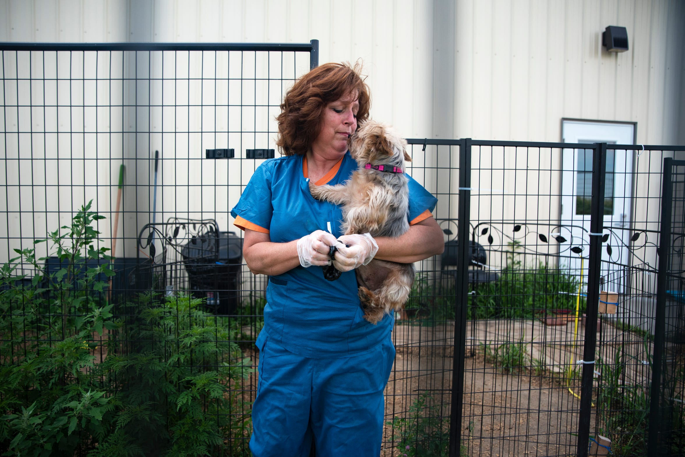 Amy Heinz holds Australian silver terrier Lady Abagail, 10, outside AHeinz57' Pet Rescue & Transport in De Soto, Iowa on August 1, 2019. Over 200 dogs were sold from a puppy mill in May, and Heinz bought 31 of them to find them each rescue homes. Despite no official diagnoses, Lady is one of 31 dogs quarantined for almost three months due to possible risks of spreading canine brucellosis.