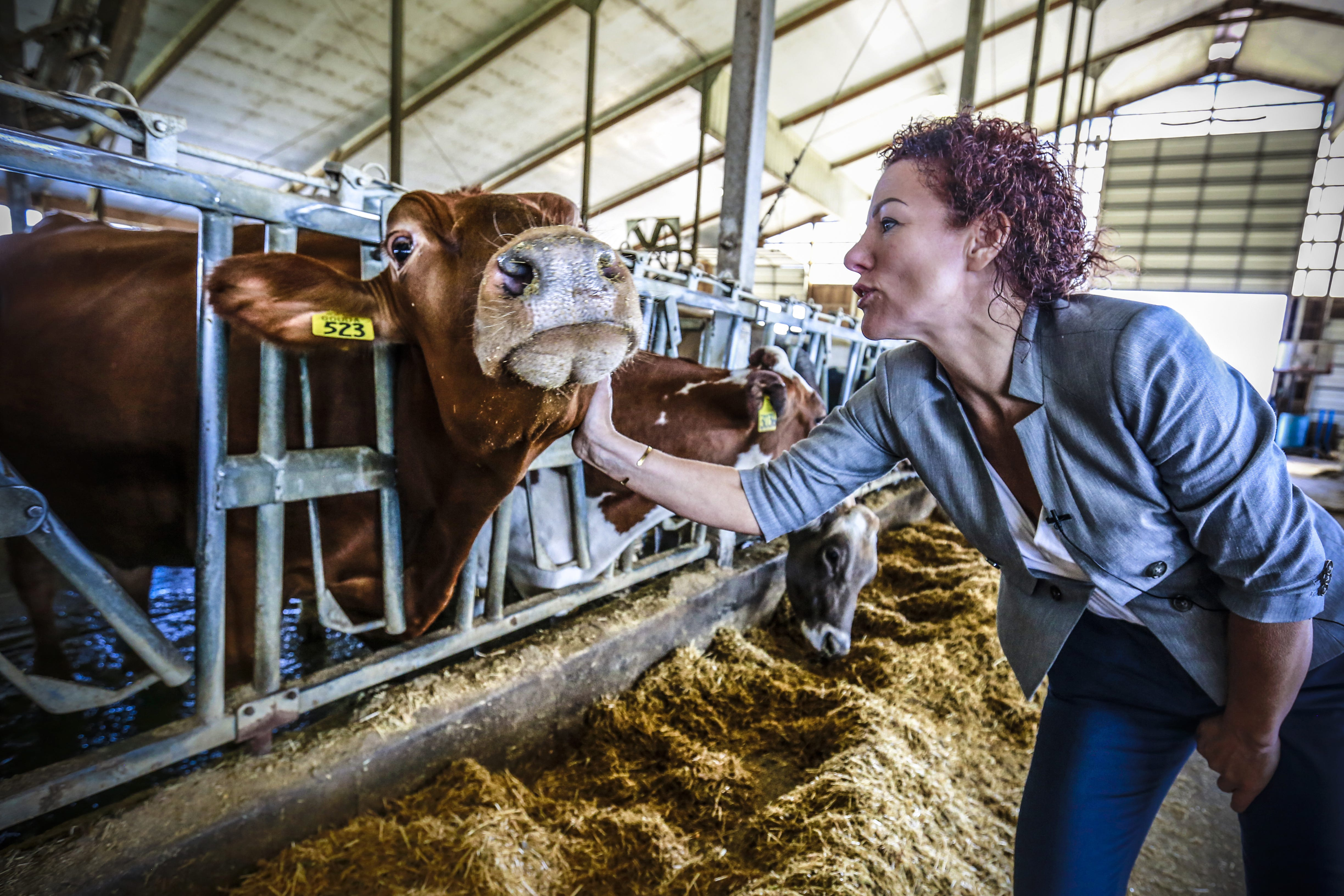 Owner Marieke Penterman interacts with one of her cows at Marieke Gouda in Thorp.