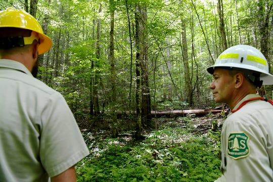 Jason Herron, left, and Appalachian District Ranger Richard Thornburgh look into an area of the Twelve Mile Project July 24, 2019.