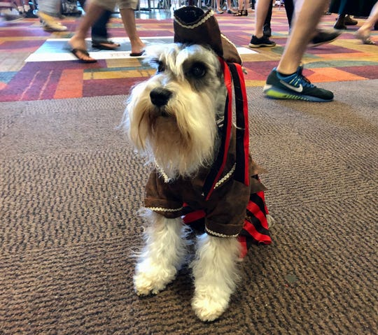 Gandalf the schnauzer shows off his pirate costume at Gen Con 2019. The 7-year-old pup attended with owner Sean David.