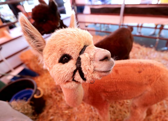 The Wisconsin State Fair, including Penelope the alpaca, ends its run at State Fair Park Sunday.