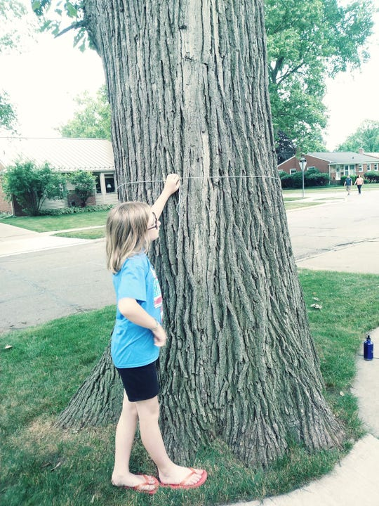 Ruby Edwards takes the measure of a Bur Oak in Birmingham.