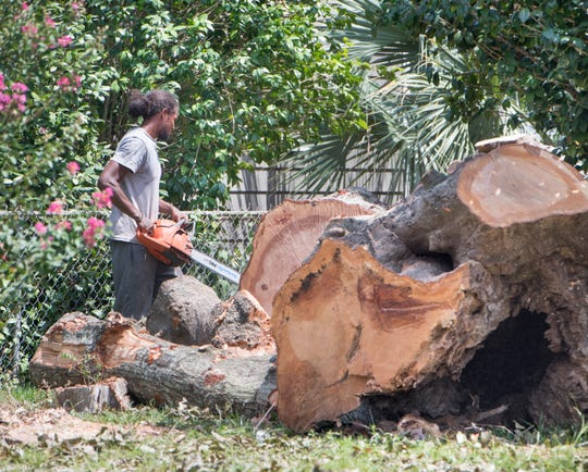 A tree service cuts down a large tree on East Scott Street in Pensacola on Aug. 2.