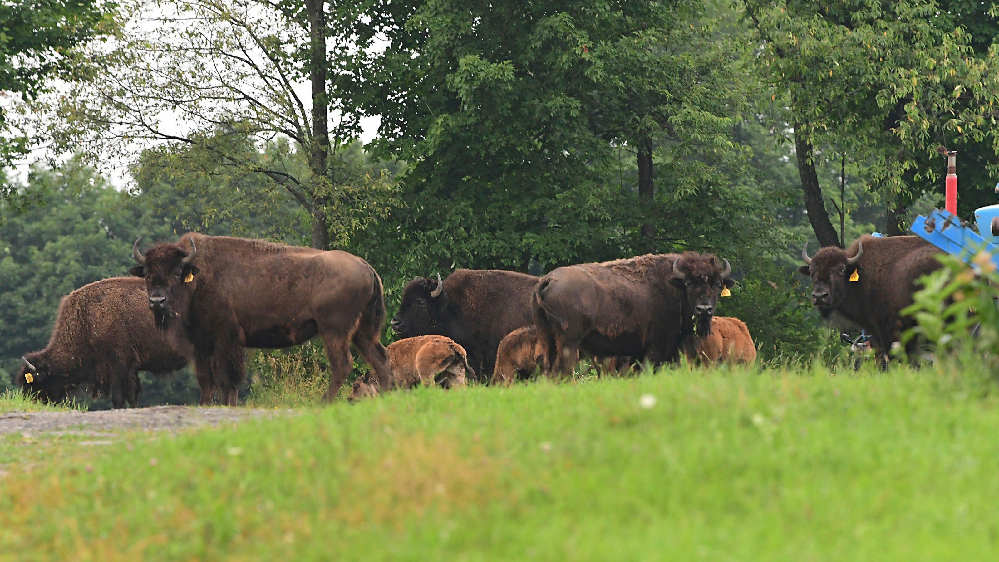 pierde greutatea buffalo new york