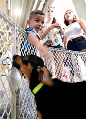 Titans fan Aiden Appleton pets Sharon, a Rottweiler mix, during the Pup Rally before practice at Nissan Stadium Saturday, Aug. 3, 2019, in Nashville, Tenn.