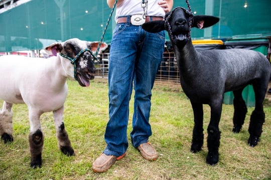 Riley Skatvold, 13, prepares for the open sheep show at the Sioux Empire Fair on Saturday.