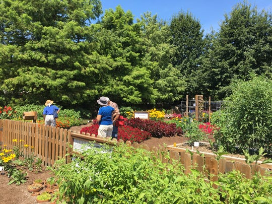 The demonstration garden at the Indiana State Fairgrounds draws thousands of visitors during the fair. Dozens of new annuals, perennials, vegetables and herbs are on display on the north side of the fairgrounds, next to the DNR exhibit.